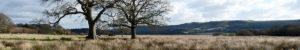 amberley-wild-brooks-1200x200